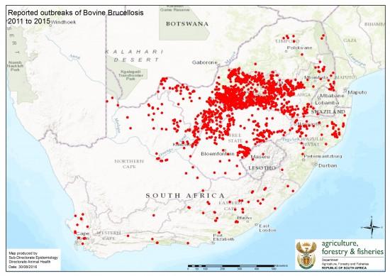 bovine-brucellosis-2011-to-2015